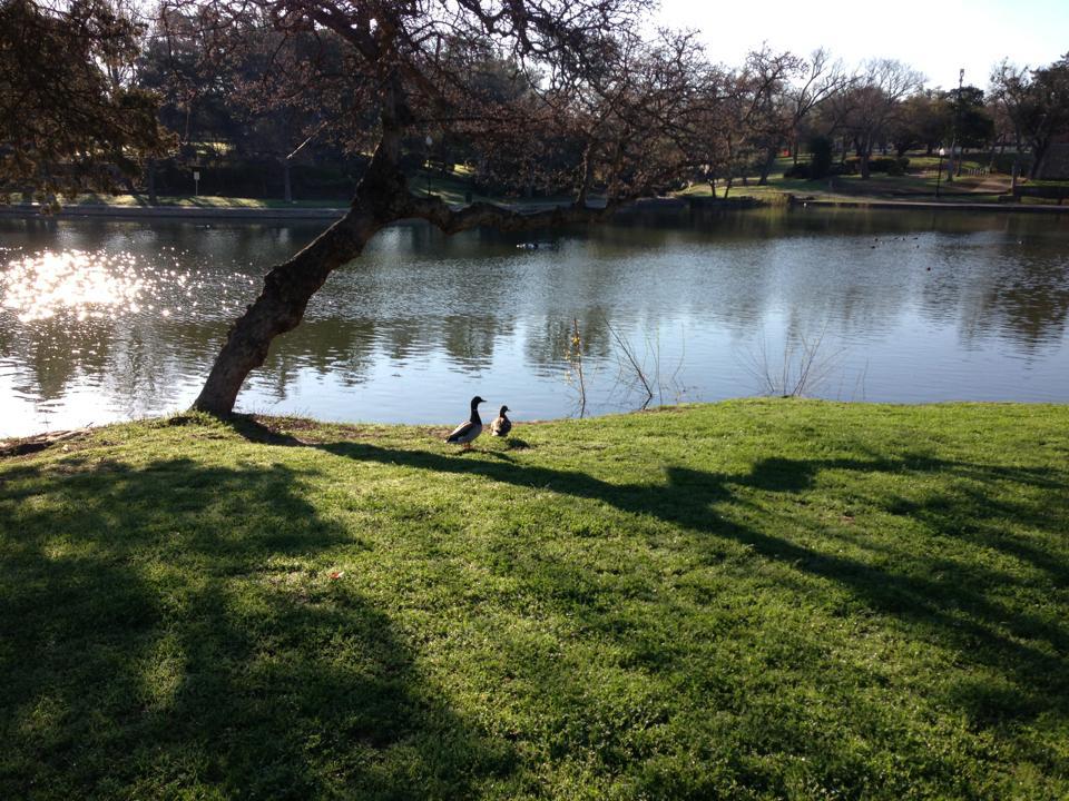 Ducks at Kidd Springs