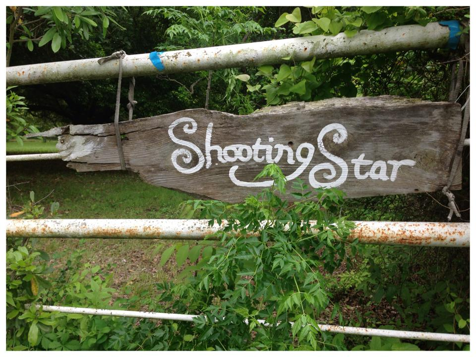 Forest Bathing_Shooting Star Ranch