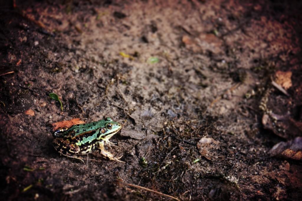 frog_mud