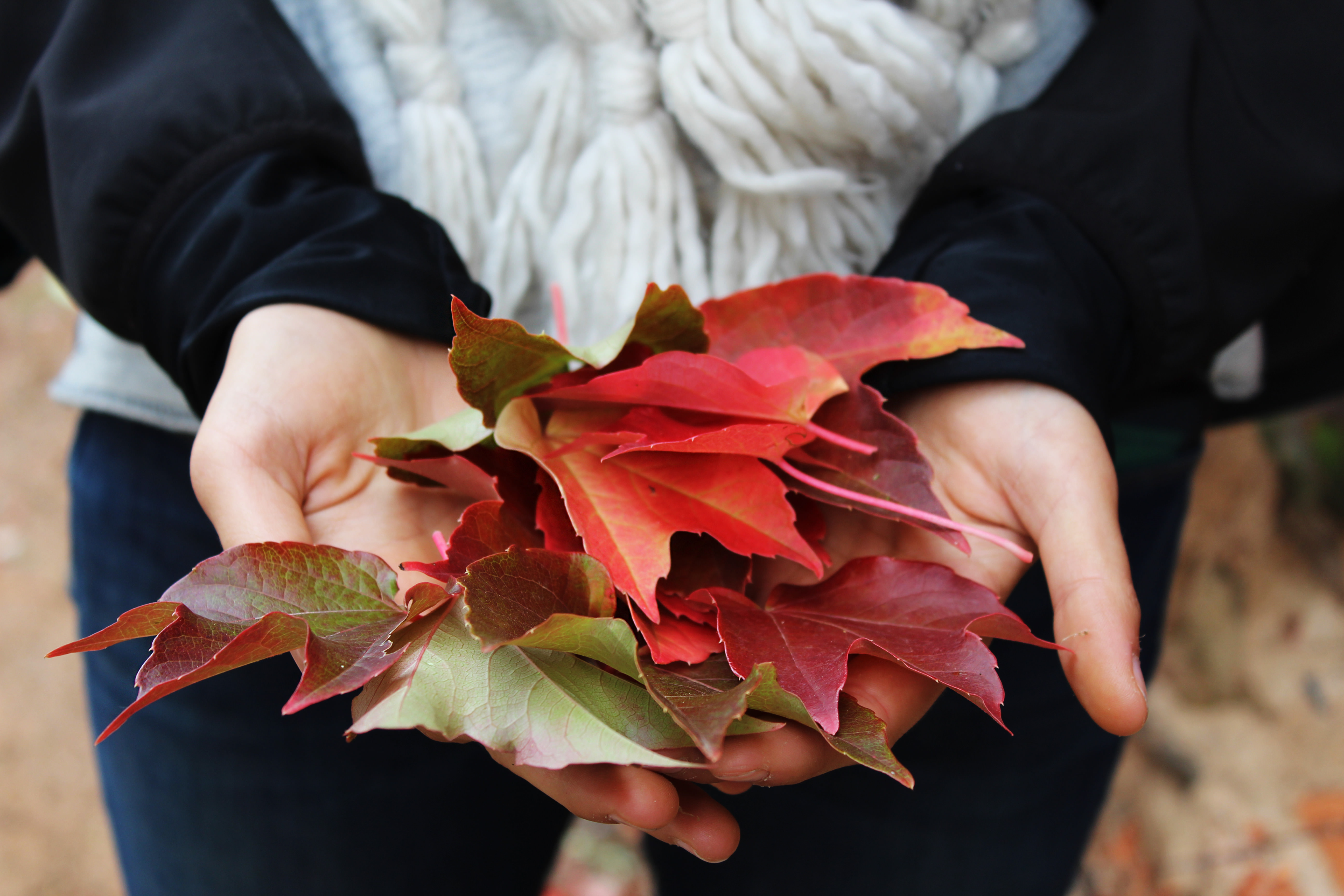 leaves_in_hand